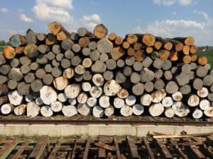 Zuschnitt von Rundholz für Bretter oder Schnittholz