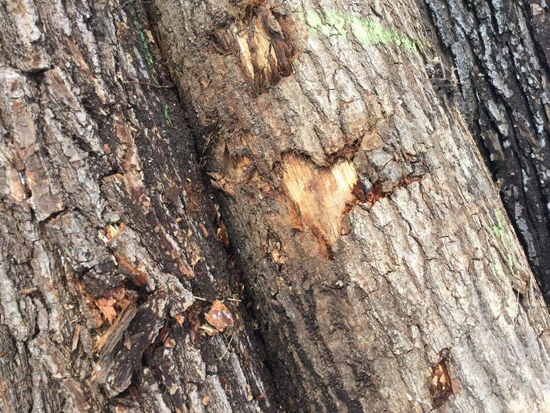 Das Unternehmen Baran behandelt Holz mit Liebe und Sorgfalt