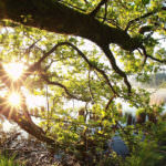 Eiche - Infos & Tipps zu Eichenholz
