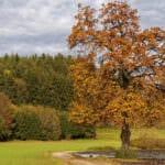 Esche - Infos & Tipps zu Eschenholz